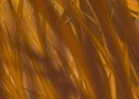 tim-manh-ghep-con-thieu-trong-phim-hoat-hinh-disney-19