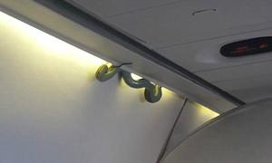 Rắn độc bất ngờ xuất hiện trên máy bay