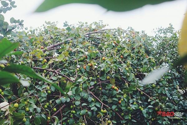 ban-chi-mat-10-nghin-dong-de-so-huu-ca-vuon-tao-an-thoa-thich-1