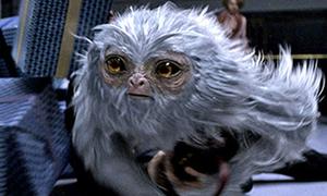 Quiz: Đoán tên quái vật trong phim 'Sinh vật huyền bí và nơi tìm ra chúng'