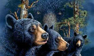 Bạn có thể nhìn thấy bao nhiêu con gấu?