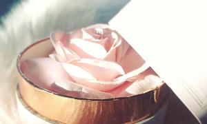 Phấn highlight hoa hồng đẹp như cổ tích khiến hội con gái mê tít
