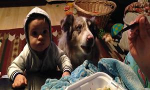 Chú chó mau mồm mau miệng, gọi 'mama' khi đòi ăn