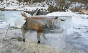 Cái lạnh chết người ở châu Âu