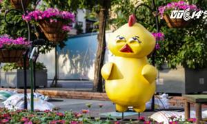 Gà con mặt hờn dỗi kute ở đường hoa Nguyễn Huệ