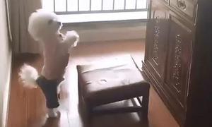 Chú chó mặc đồ đẹp, chắp tay 'cúng cụ'