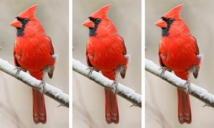 Tinh mắt phát hiện điểm khác biệt giữa các con chim