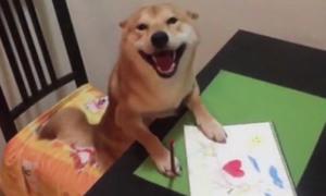 Chú chó thông minh cầm bút tô màu 'chuẩn không cần chỉnh'