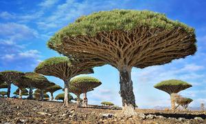 Loạt cây có hình thù lạ lùng, ma mị khắp thế giới