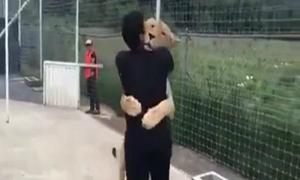 Hổ ôm chầm, quấn quýt người đàn ông