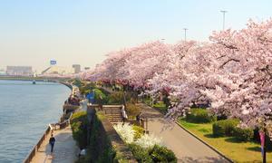 Gợi ý điểm mua sắm mùa hoa anh đào tại Nhật Bản
