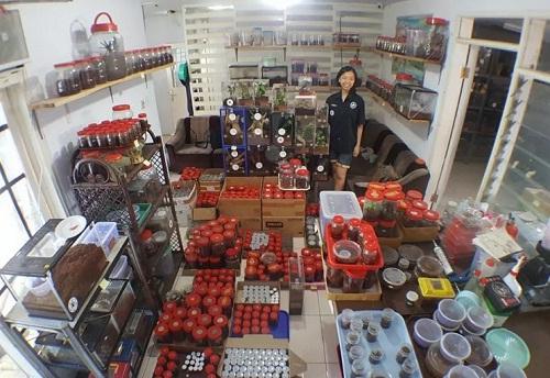 co-gai-nuoi-1500-con-nhen-doc-nhat-hanh-tinh-lam-thu-cung-1
