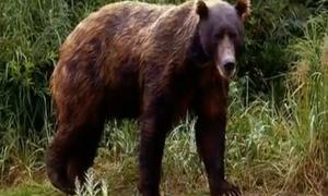 6 'quái thú' đáng sợ ăn thịt hàng trăm người trong lịch sử