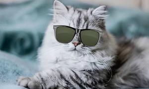 Người có óc quan sát tốt sẽ chọn được cặp mắt phù hợp cho mèo