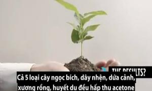 5 loại cây giúp hấp thụ chất độc hại trong phòng