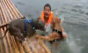 Hai chú chó dũng cảm hợp sức cứu chủ đang đuối nước