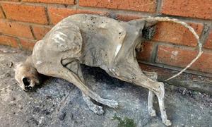 Phát hiện xác ướp mèo 30 năm tuổi khi dọn nhà