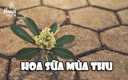 26-dieu-nhat-dinh-phai-lam-khi-dat-chan-den-ha-noi-7