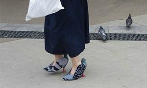 Đôi giày cao gót hình chim bồ câu gây tranh cãi