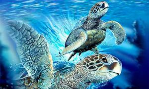 Người có thị giác 10/10 sẽ nhìn thấy hết các con rùa