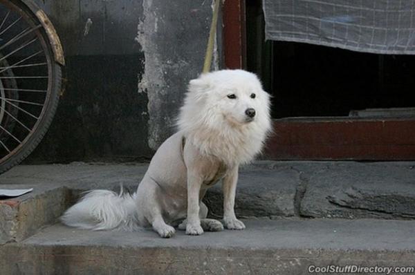 het-hon-con-chon-voi-nhung-tac-phm-cat-tia-long-loi-3