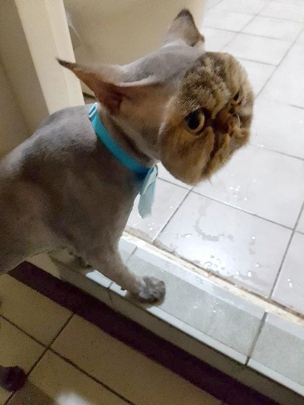 het-hon-con-chon-voi-nhung-tac-phm-cat-tia-long-loi-8