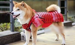 Áo giáp siêu đắt đỏ dành cho chó mèo