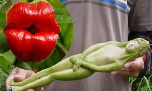 Những loài hoa, quả có hình dáng gợi cảm nhất hành tinh