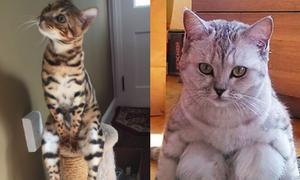 Những chú mèo phong cách nhất quả đất