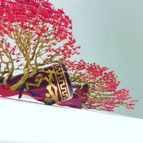 cay-bonsai-duoc-xep-tu-hang-nghin-con-hac-giay-6