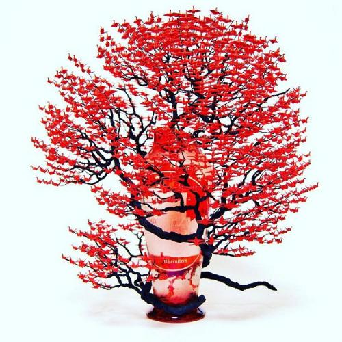 cay-bonsai-duoc-xep-tu-hang-nghin-con-hac-giay-7