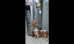 Clip cậu bé cùng chó cưng 'ăn vụng' hút triệu lượt xem