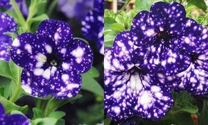 Kỳ lạ loài hoa nở ra 'lung linh' tựa dải ngân hà