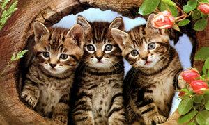 Bài toán tính số mèo khiến mọi người 'chao đảo'