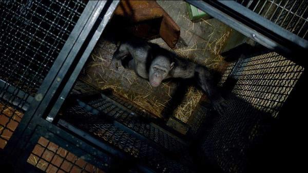 Tác phẩm có nhiều cảnh phim con người tra tấn loài khỉ.