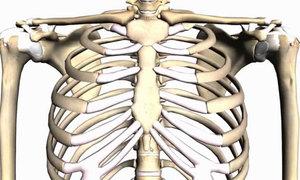 Gọi tên các vị trí xương trên cơ thể khó hay dễ?