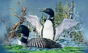 Người có trí tưởng tượng cao mới đếm được số chim trong hình