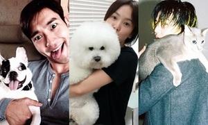 Loạt thú cưng đáng yêu của các sao Hàn