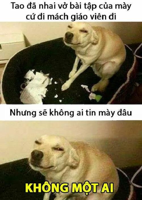 cuoi-te-ghe-7-9-doi-khong-nhu-ngon-tinh-5