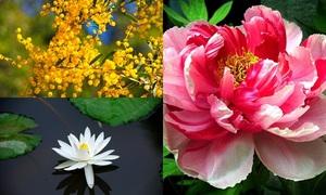 Quiz: Đoán tên quốc gia qua quốc hoa