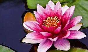 Trắc nghiệm: Loài hoa nào tượng trưng cho con người bạn?