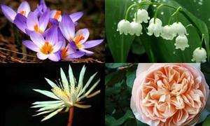 8 loài hoa đắt nhất thế giới có giá hàng tỷ đồng