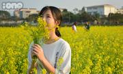 Gái xinh Hà thành rộn ràng check-in ở đồng hoa cải vàng