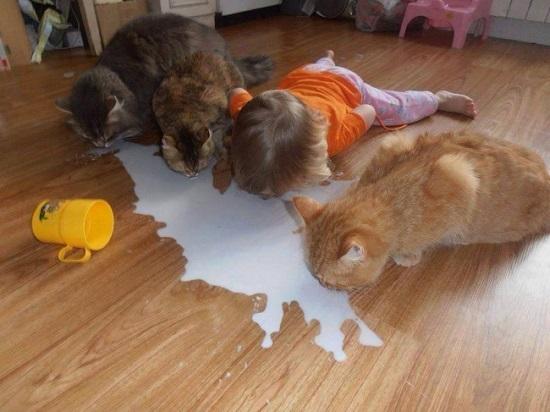 Nếu ở nhà cả ngày với mèo, em ấy tưởng mình là mèo cũng dễ hiểu.