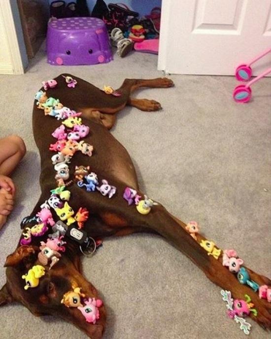 Khi cô chủ nhỏ thích trang hoàng cho bạn cún.