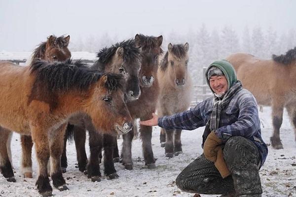 Người dân làng Oymyakon vẫn thường sử dụng ngựa như là một phương tiện giao thông, đồng thời là món ăn truyền thống.