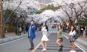 Trường đại học đẹp nhất Hàn Quốc thành bối cảnh của hơn 100 bộ phim