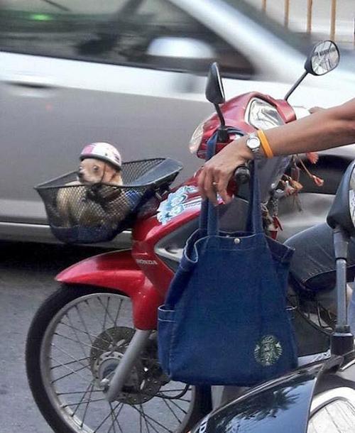 Luôn chấp hành luật giao thông.