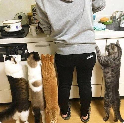 Muốn ăn thì lăn vào bếp.