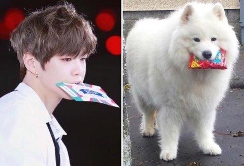 Lật tấy thói quen khiến Kang Daniel có biệt danh cún con - 1